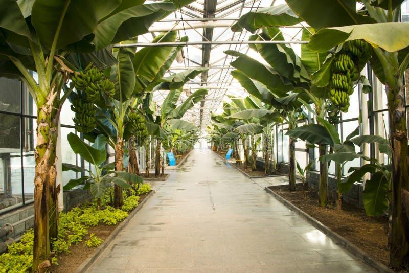 Azjata Chiny, Pekin, geotermiczny expo ogród, szklarnia obrazy royalty free