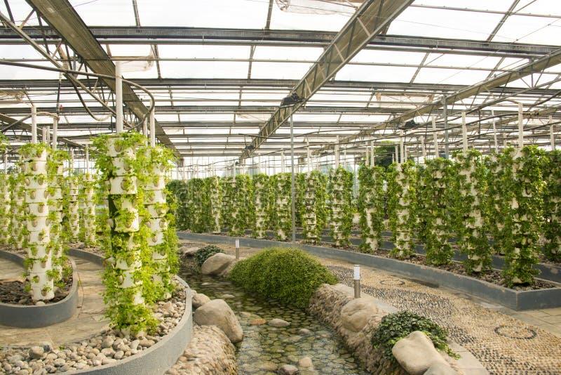 Azjata Chiny, Pekin, geotermiczny expo ogród, szklarnia zdjęcia royalty free