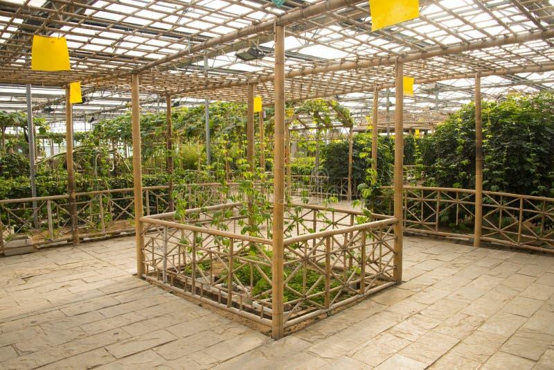 Azjata Chiny, Pekin, geotermiczny expo ogród, szklarnia zdjęcie stock