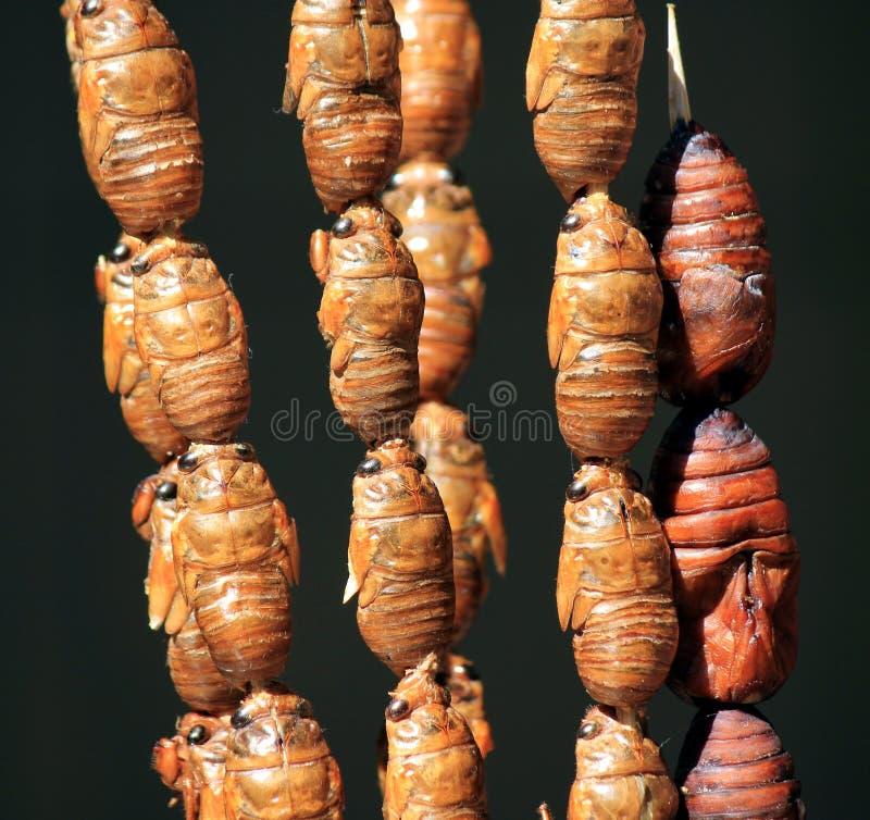 azjata głęboki jedzenie smażyć jedwabnicze uliczne dżdżownicy zdjęcie stock