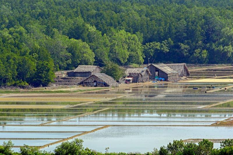 Azjata rolne budy, Wietnam obrazy royalty free