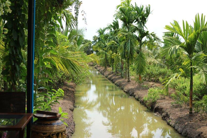 Azjaty stylowy naturalny sad, przejrzysta błękitna dzień zieleni drzewa młynówka fotografia stock