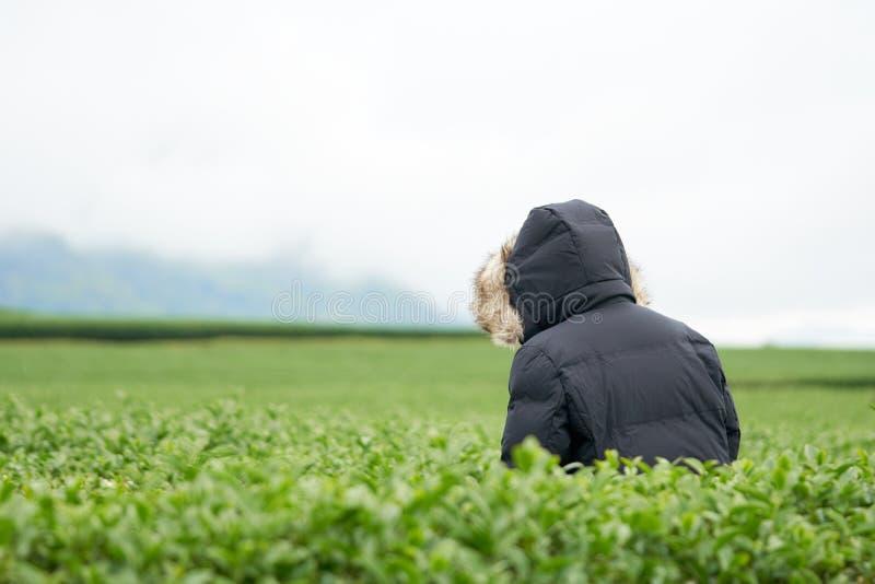 Azjatycka kobiety ręka podnosi up herbacianych liście od herbacianej plantaci nowi krótkopędy jest miękkimi krótkopędami Woda jes obraz stock