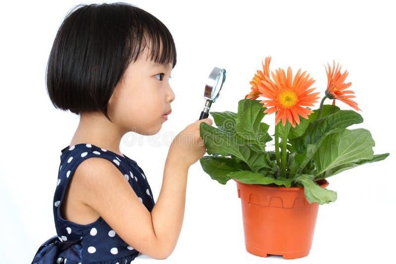 Azjatycka Mała Chińska dziewczyna Patrzeje kwiatu przez Powiększać zdjęcie royalty free