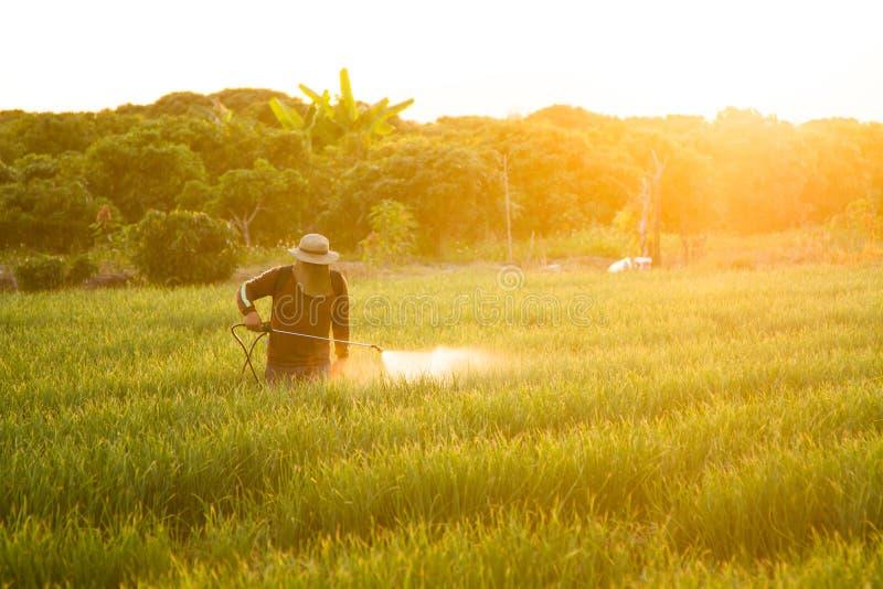 Azjatycki średniorolny opryskiwanie pestycyd uprawy roślina w gospodarstwie rolnym zdjęcie stock