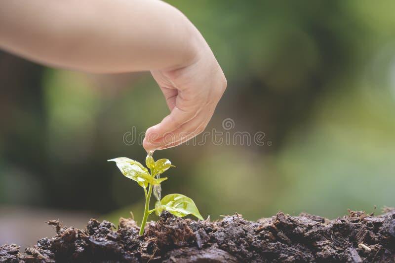 Azjatycki dzieciak trzyma młodej zielonej rośliny w ręce obraz stock