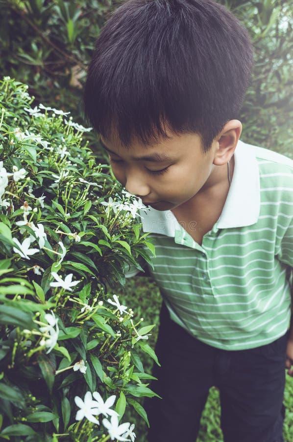 Azjatycki dziecko podziwia dla menchii natury i kwiatów wokoło przy backy obraz stock