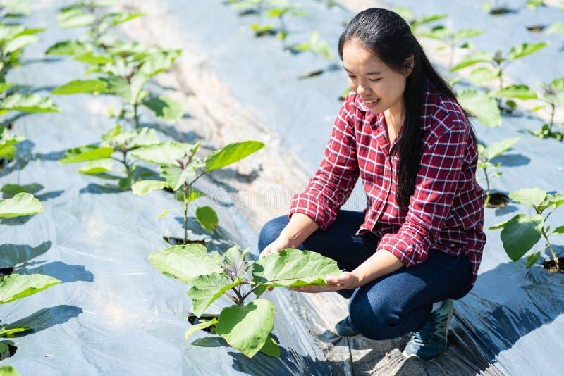 Azjatycki młoda kobieta rolnik w organicznie jarzynowym ogródzie obrazy stock