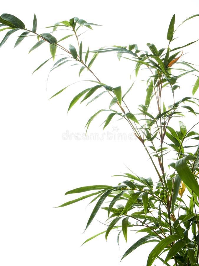 Azjatycki naturalny tło z bambusem obraz stock