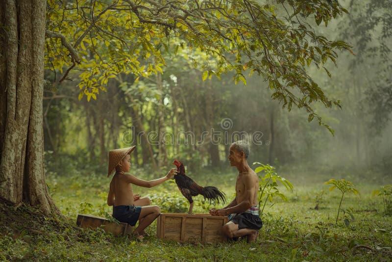 Azjatycki rolnik z synem trenuje jego walczącego koguta przy krajem fotografia stock