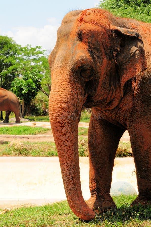 Download Azjatycki słoń zdjęcie stock. Obraz złożonej z portrety - 28959752