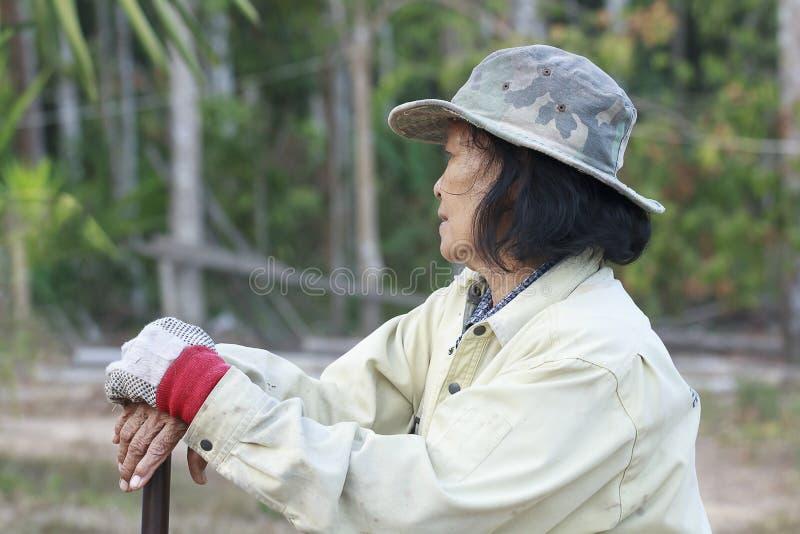 Azjatycki stara kobieta rolnik zdjęcie royalty free