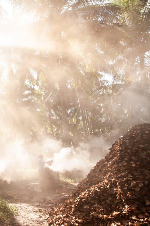 Azjatyckiej żeńskiej ogrodniczki skorupy płonący kokosowy węgiel drzewny w kokosowych drzewkach palmowych uprawia ogródek Rolnict obrazy royalty free