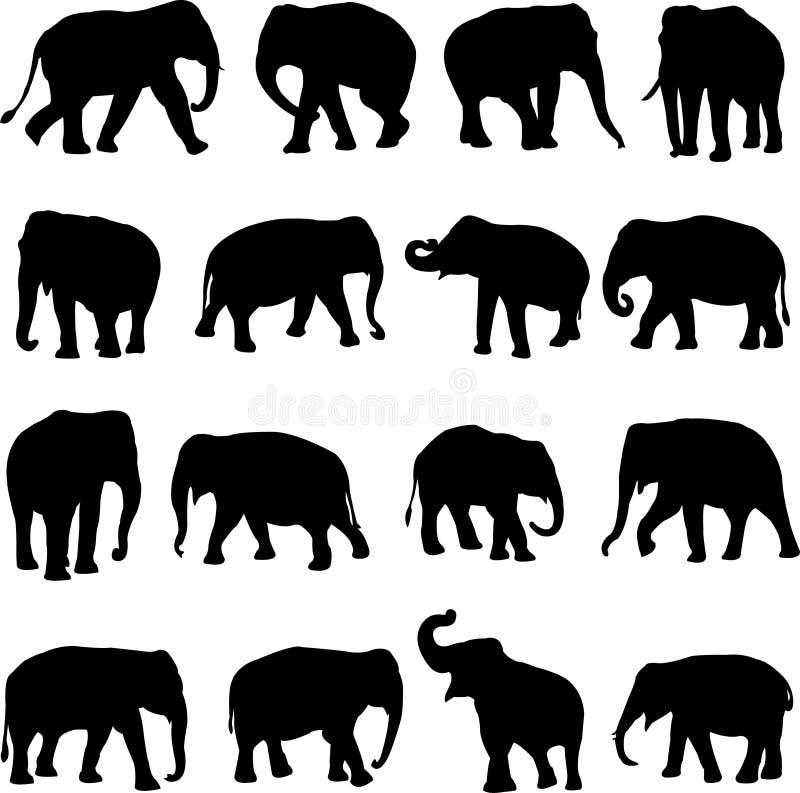 azjatykci słonie ilustracji