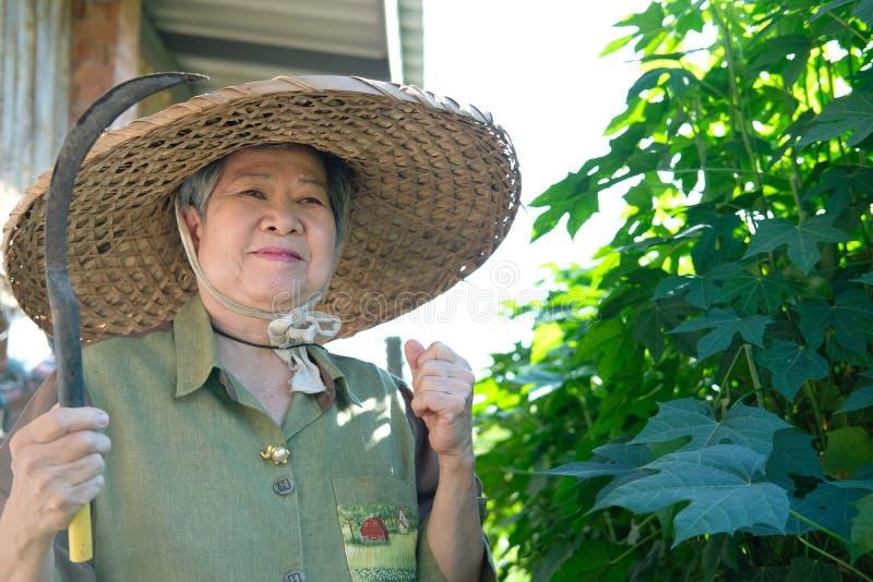 azjatykciej starszej starszej osoby kobiety starszej ogrodniczki mienia średniorolny sierp obraz stock
