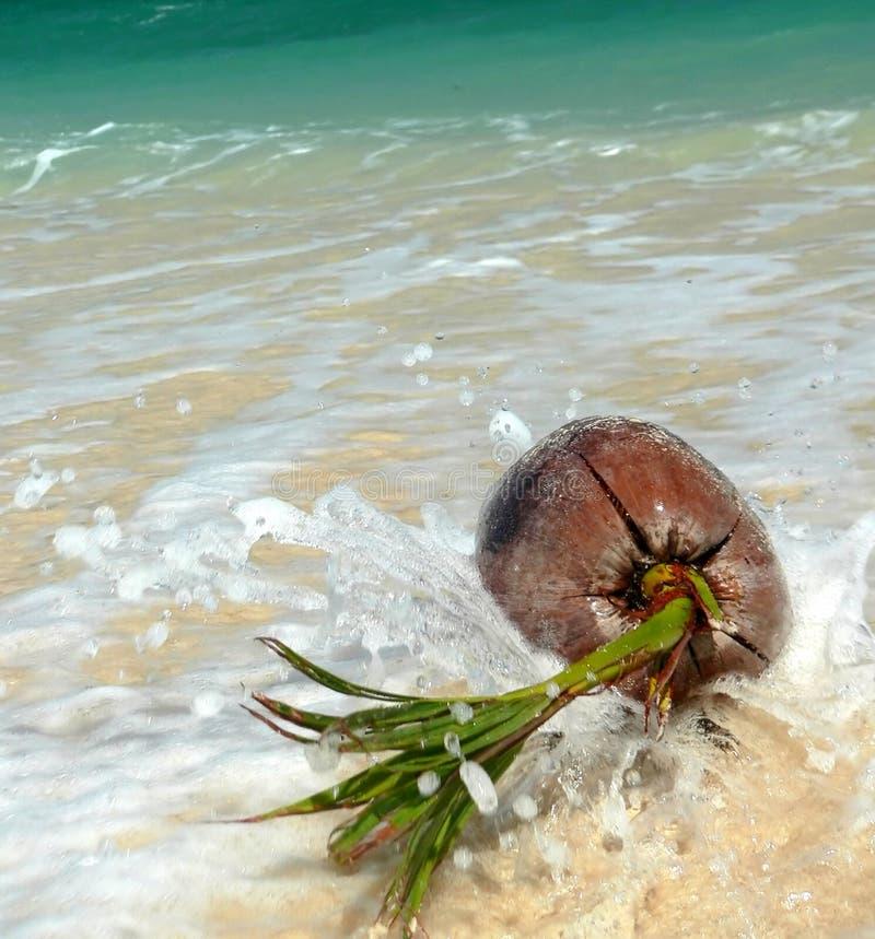 azji plaży korali se bryzgający kokosowy zdjęcie stock