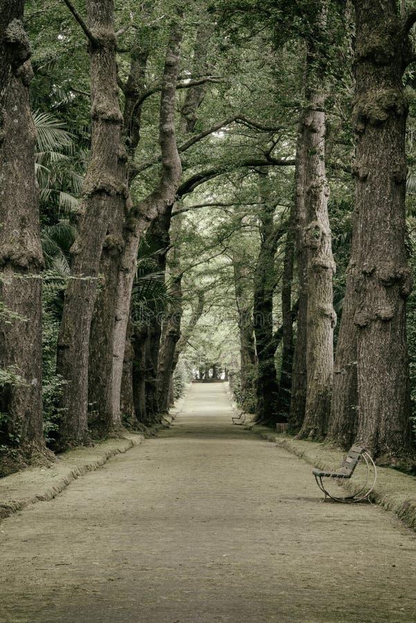 Azorean植物园 免版税库存照片