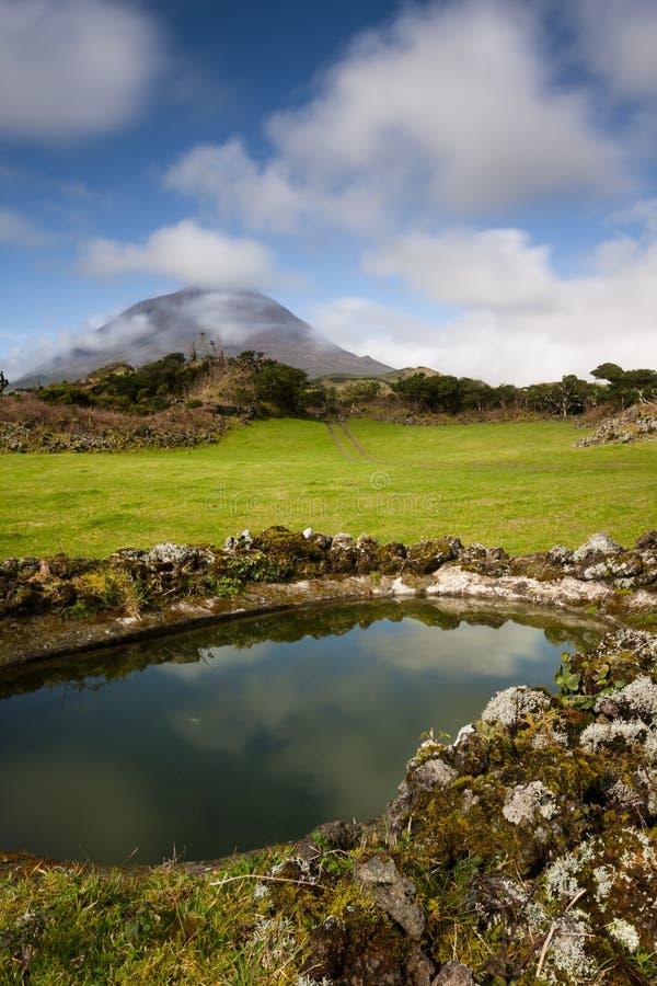 Azorean выгоны стоковое изображение rf