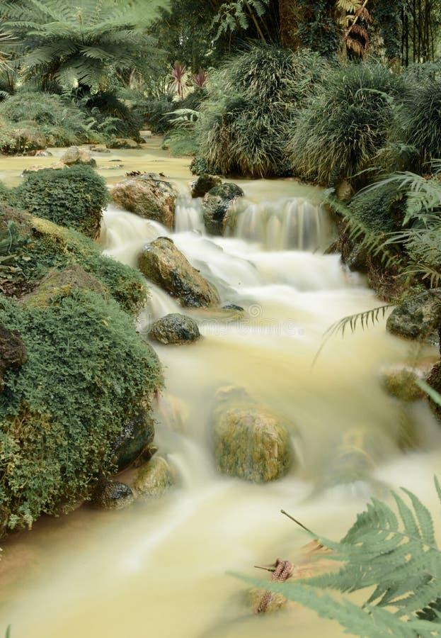 Azorean Botanical Garden stock photo
