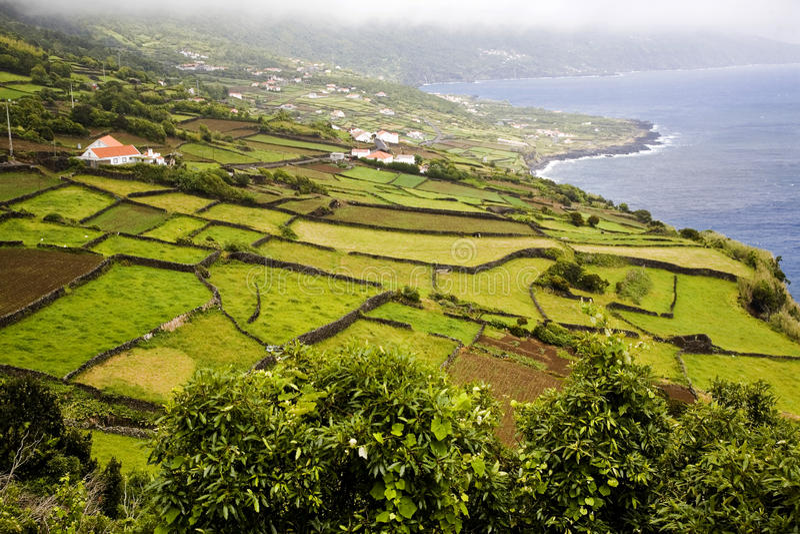 Azoren-Insel stockfotos