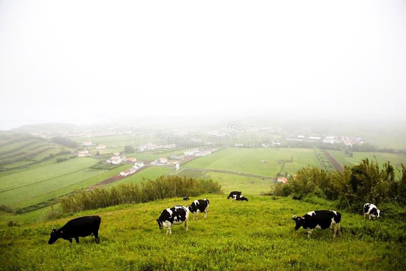 Azoren-Insel - Portugal stockfoto