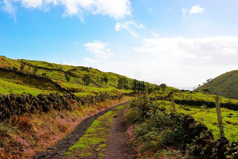 Azores bygdplats, lantligt landskap, grönt frodigt gräs, färgrika blommor, kullerstenväggar, grusväg, lopp Portugal royaltyfri foto