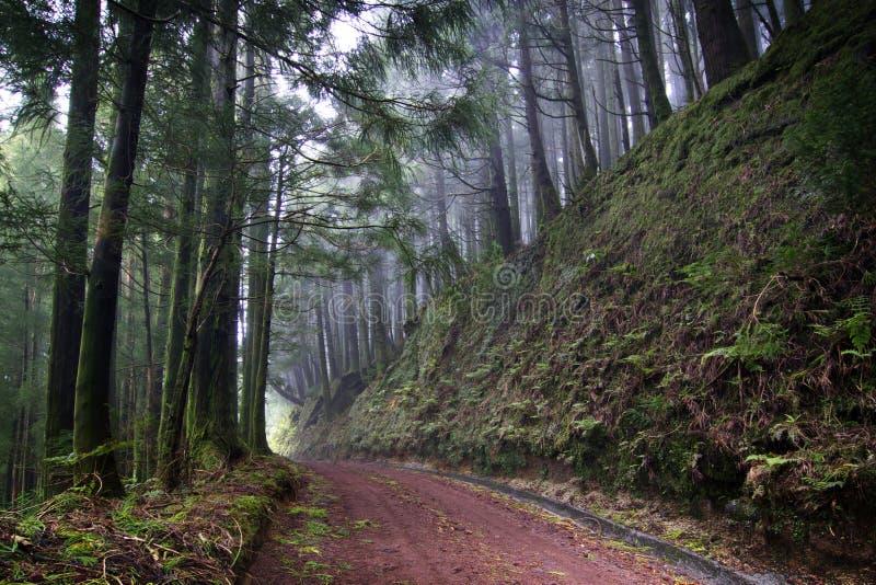 Azores: Grön skog royaltyfria foton