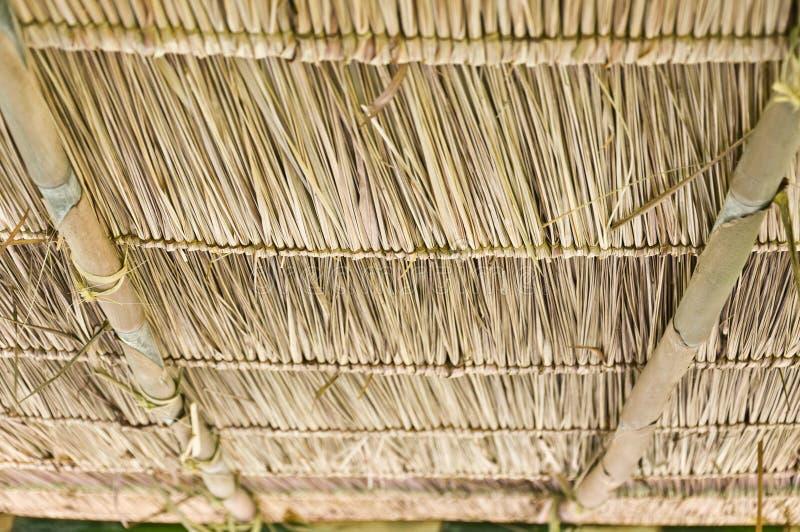 Azotea de la hierba del vetiver. fotografía de archivo libre de regalías