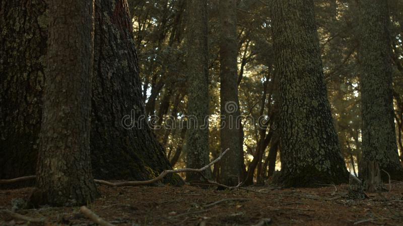 Azrou-Wald im marokkanischen Atlas lizenzfreies stockfoto
