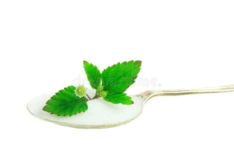 Aztec Sweet Herb Stock Image
