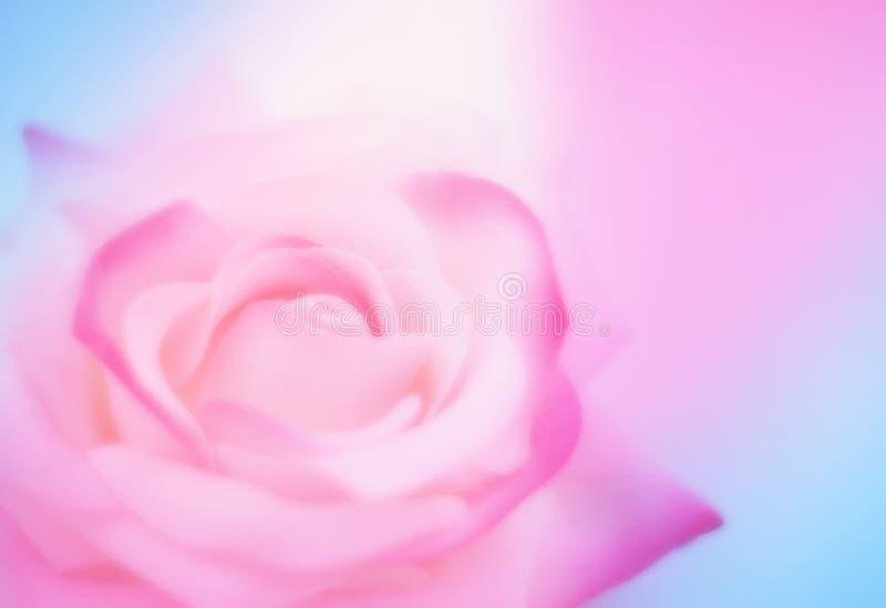 Azul cor-de-rosa macio o fundo borrado com aumentou imagem de stock royalty free