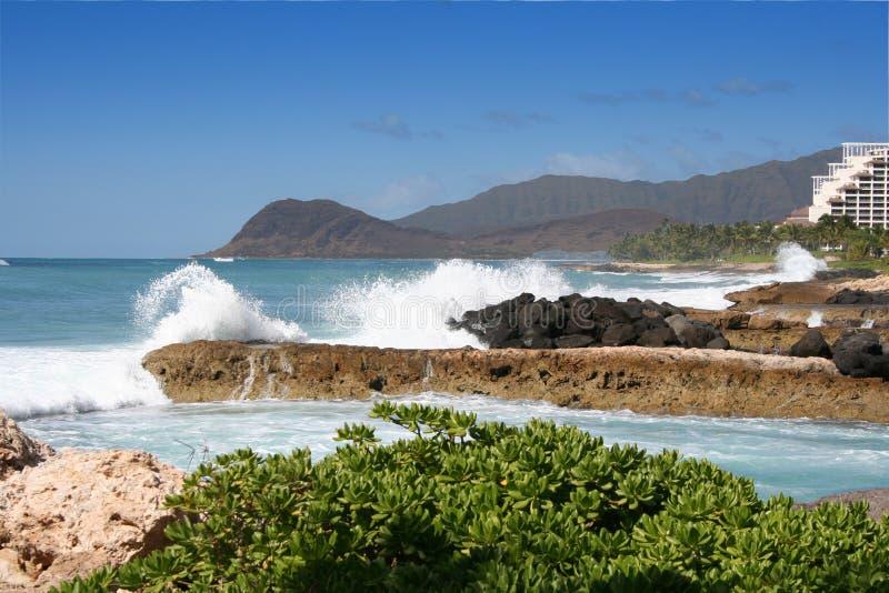 Azul de Havaí fotografia de stock royalty free