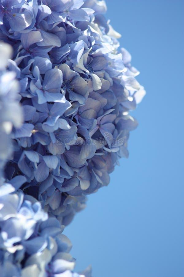 Azul de la flor imagen de archivo libre de regalías