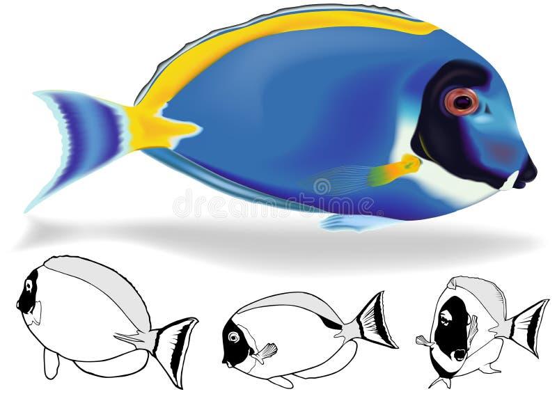 Azul de pó Tang Set ilustração stock
