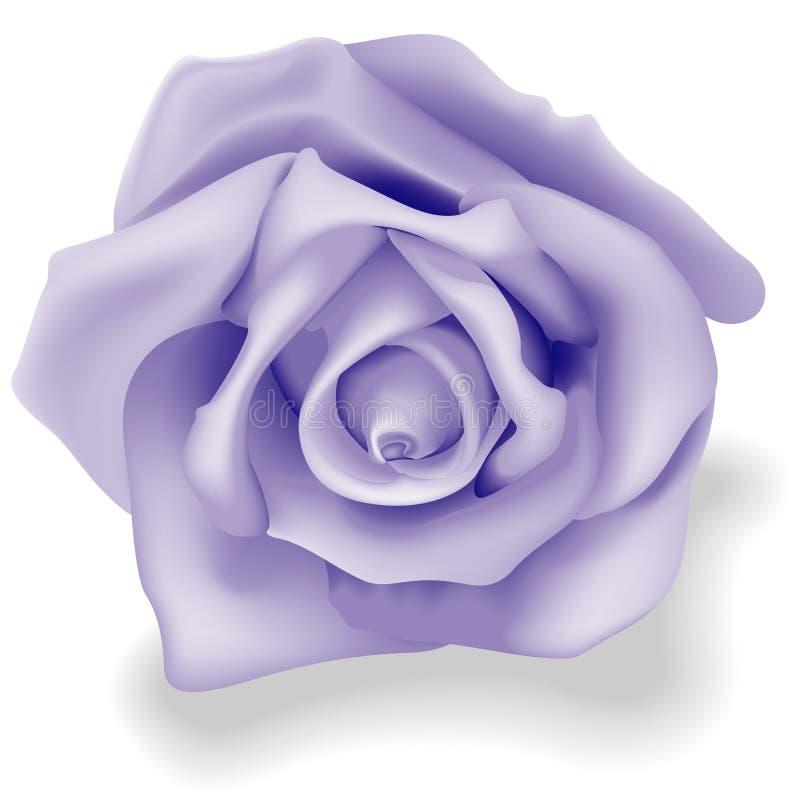Azul de Rosa ilustração stock
