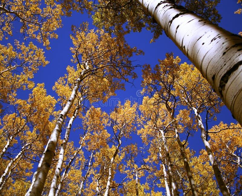 Azul e ouro acima fotografia de stock