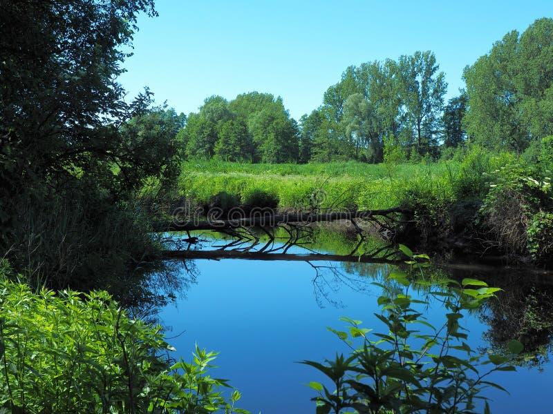 Azul no rio imagens de stock royalty free