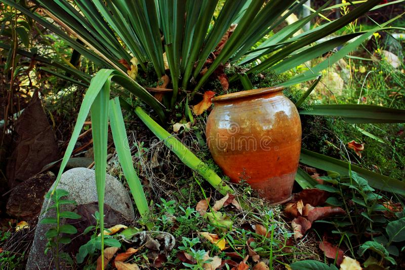 Azul, palmeira, folhas pontiagudas de uma planta decorativa imagem de stock royalty free