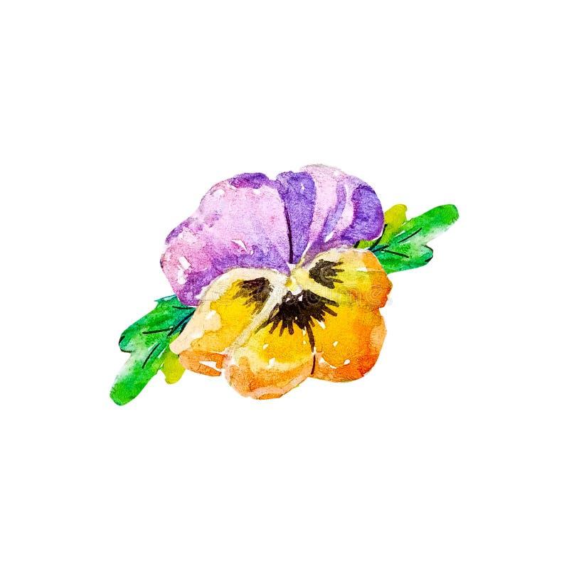Azul tricolor, salvaje de la violeta de pensamiento y pensamientos coloreados amarillos con negro en el centro, violaceae, flor c ilustración del vector