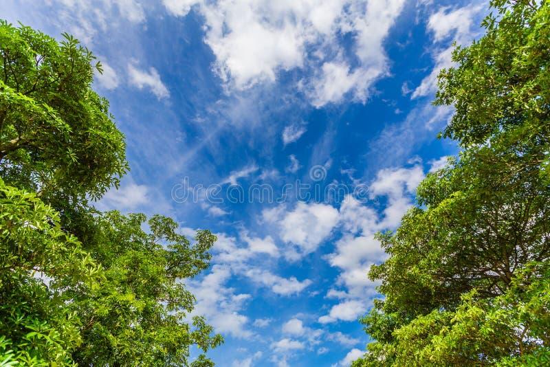 Azul y árbol de cielo con las nubes foto de archivo libre de regalías
