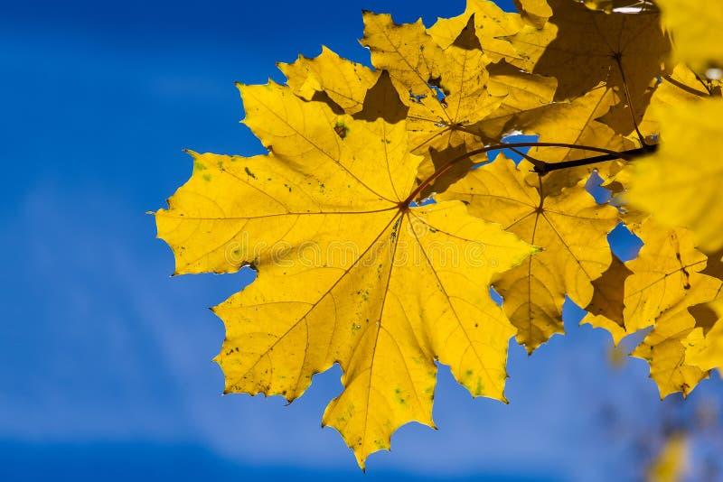Azules 5 de octubre fotografía de archivo libre de regalías