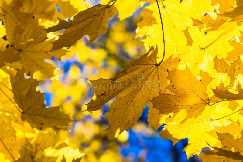 Azules 11 de octubre foto de archivo libre de regalías
