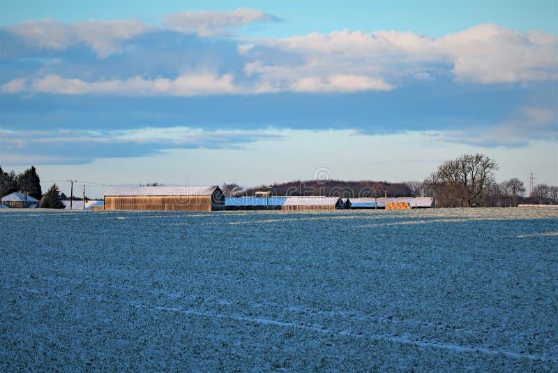 Azules del amanecer de las tierras de labrantío en un día escarchado de febrero fotografía de archivo libre de regalías