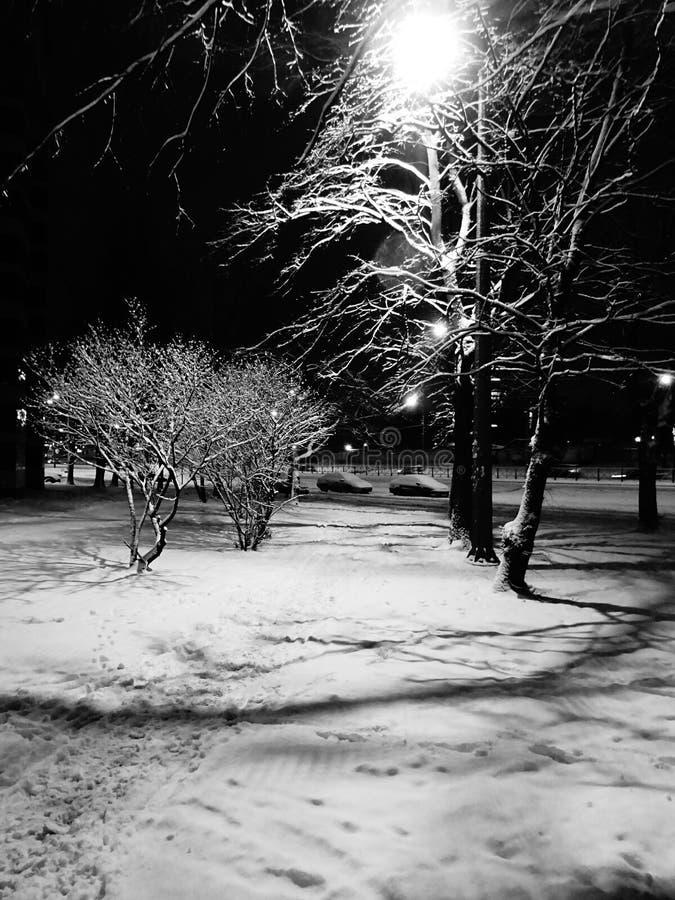 Azules del invierno foto de archivo libre de regalías