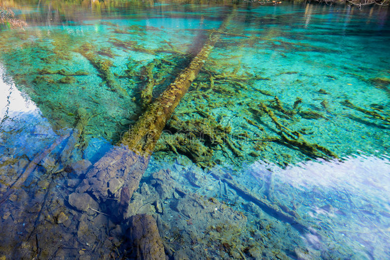 Azure lake with submerged tree trunks. Jiuzhaigou Valley was recognize by UNESCO as a World Heritage Site and a World Biosphere Reserve - Jiuzhaigou, Sichuan stock image