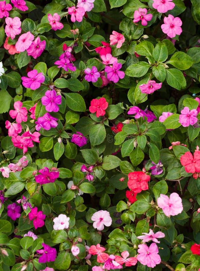Bâti de fleur photo libre de droits