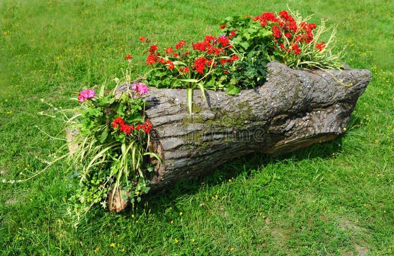 Bâti de fleur dans un logarithme naturel en bois de jardin formel photo libre de droits