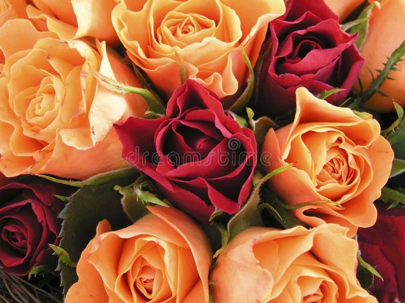 Bâti des roses II photos stock