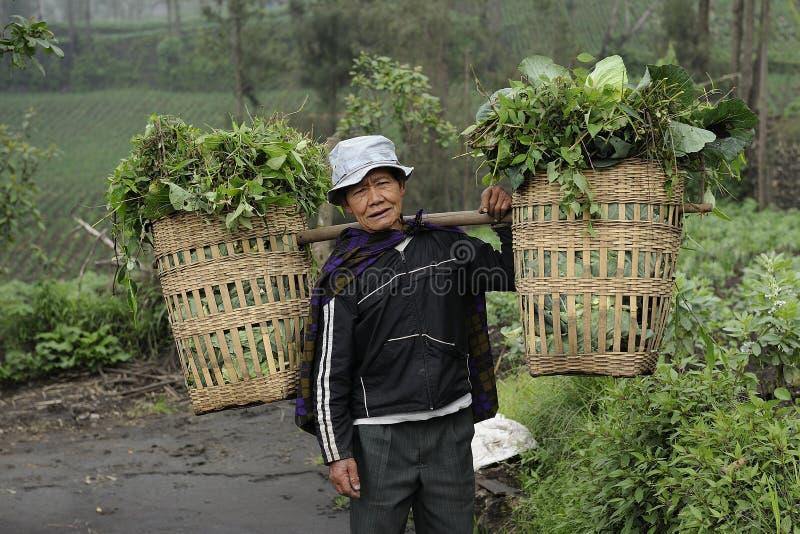 Bâti proche Bromo d'agriculteur image stock