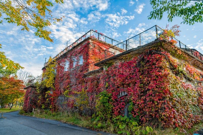 Bâtiment abandonné couvert de couleurs multiples de belles feuilles dans la saison d'automne photographie stock
